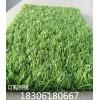幼儿园户外装饰人工草坪 人造草坪地毯园林绿化青岛晟林厂家直销