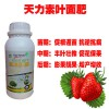 草莓叶面肥草莓用啥叶面肥好草莓膨大叶面肥