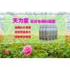 花卉营养叶面肥花卉叶面肥料好用花卉叶面肥