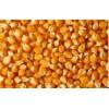 鑫弘宇大量收购玉米、菜粕等饲料原料