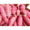 葫芦岛商薯19红薯品种 葫芦岛商薯19红薯产地