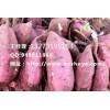 吉林商薯19红薯品种 吉林商薯19红薯产地