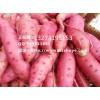 四平商薯19红薯品种 四平商薯19红薯产地