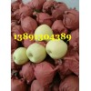 陕西大荔酥梨基地批发,大荔砀山酥梨产地种植价格