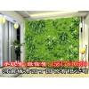郑州健身房植物墙有哪些公司做的好|垂直绿化—河南城市园丁