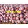 陕西大荔地窖膜袋红富士苹果产地价格