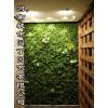 城市园丁郑州健身房植物墙-河南城市园丁园艺有限公司