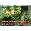 河南郑州阳台生态墙制作_绿化行业领先品牌