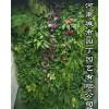 郑州校园植物墙施工价格-河南城市园丁园艺有限公司