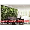 郑州学校植物墙施工价格-河南城市园丁园艺有限公司