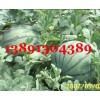 陕西大棚京新西瓜产地价格,麒麟西瓜,8424西瓜批发价格