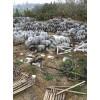 高价大量回收各种玻璃绝缘子支柱绝缘子复合绝缘子 陶瓷绝缘子