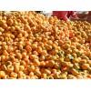 今年磨盘柿子多少钱 河北保定满城磨盘柿之乡 量大质优