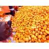 哪里的柿子品种好 河北保定满城磨盘柿子