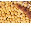 供应 大豆苷元 柳穿鱼黄素 短葶山麦冬皂苷C
