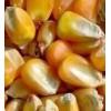 常年收购玉米大豆高粱小麦等饲料原料非诚勿扰