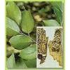 供应 新绿原酸 异绿原酸 1-咖啡酰奎宁酸 地榆皂苷I