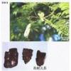 供应 柴胡皂苷B 原儿茶酸 原儿茶醛 D-四氢药根碱