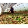 结实耐用加厚蚂蚱网 拼接使用蝗虫养殖网