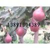 红皮梨价格-陕西考密斯梨产地,红皮梨产地订购中