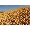 企业长期采购大豆