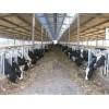 供应奶牛饲料养殖专用添加剂硫酸钙 饲料级石膏粉
