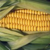 精品供应食品级玉米淀粉 玉米淀粉增稠剂 现货