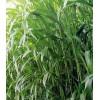 高丹草新品种及生产利用技术