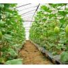 湖北果树防虫网厂家批发定制40目60目加厚脐橙防虫网
