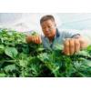 连云港豆虫养殖网40目加厚网棚型号齐全特厚丝网