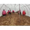 厂家批发蚂蚱养殖网25目加厚蝗虫网棚型号齐全大宽幅