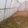 大宽幅蚂蚱养殖网25目特厚蝗虫网棚工厂直发客户