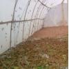 德州蚂蚱养殖网厂家批发25目特厚蝗虫网棚结实耐用