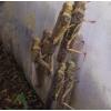 蚂蚱养殖网厂家批发加厚蝗虫网棚工厂直供大网棚