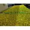 哪里有无土芽苗菜-山东益康园芽苗菜种植基地