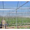 加厚果树防虫网全新料大网片工厂直供60目加厚丝网