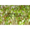 芽苗菜种植技术加盟-芽苗菜 益康园
