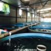 定做镀锌钢板支架帆布水池价格-养殖帆布鱼池生产厂家